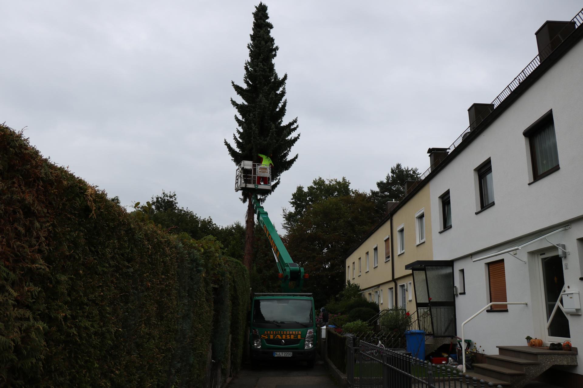 Baumfällung im Wohngebiet